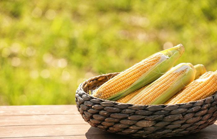 kukurice_1